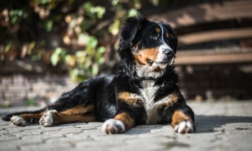 Hundeausbildung zum Therapiehund