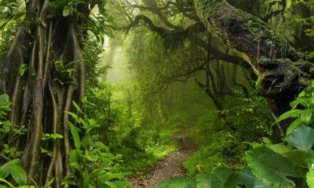 "Dschungel ""Elektronisches Patientendossier"""