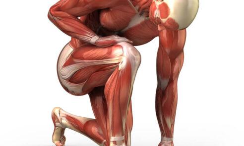 Muskelkrankheiten – Weshalb Forschung wichtig ist!