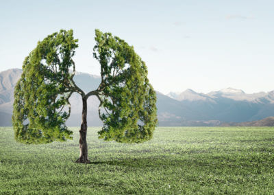 Baum auf Wiese, wie Lunge geformt